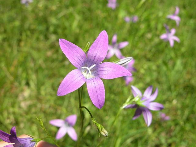 kwiat-2