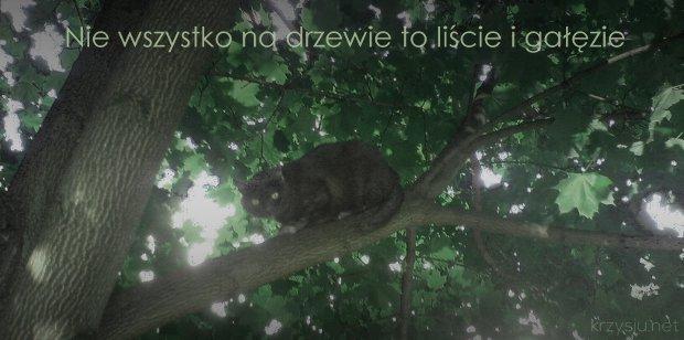 Nie wszystko na drzewie to liście i gałęzie
