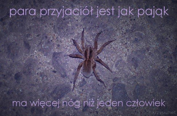 para przyjaciół jest jak pająk / ma więcej nóg niż jeden człowiek