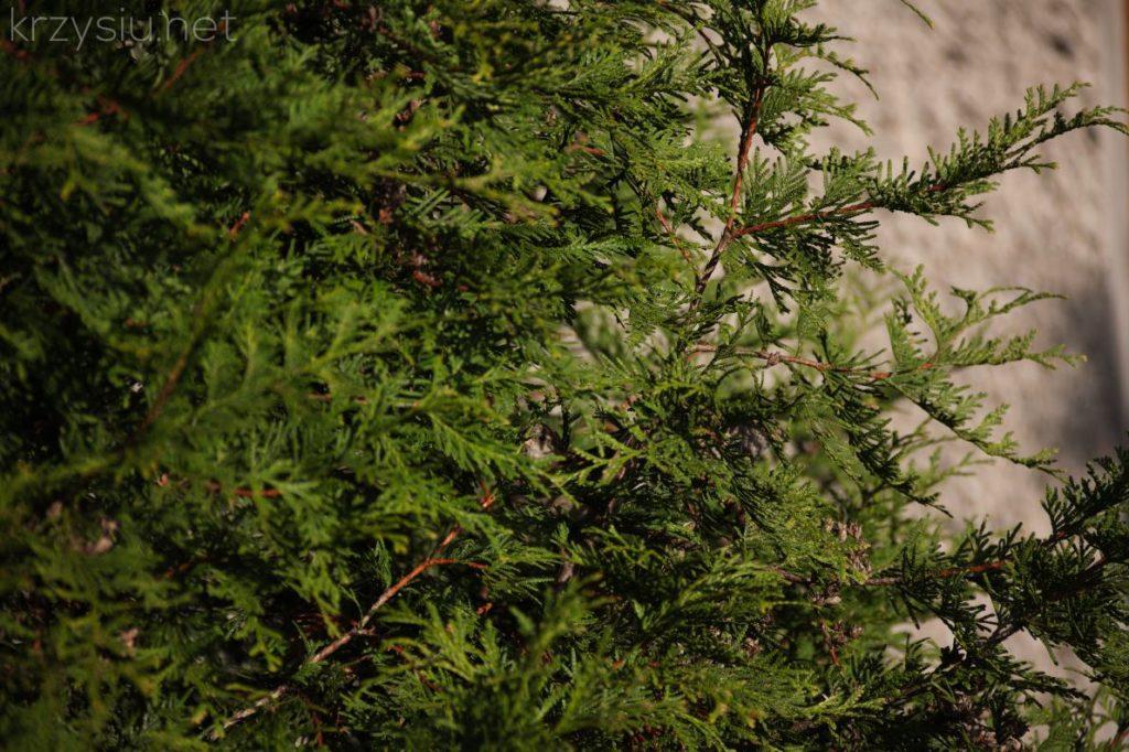 The bird hidden in the tree